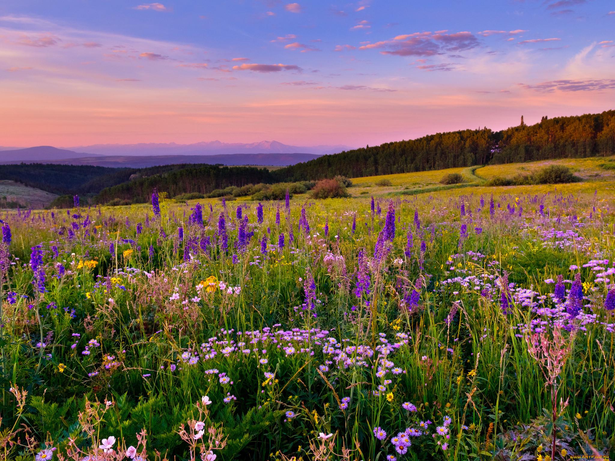 фото красивые пейзажи луга и поля сэкономите пространство